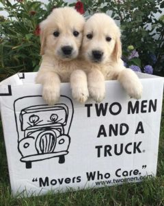 Two puppies poke their heads out of a TWO MEN AND A TRUCK moving box