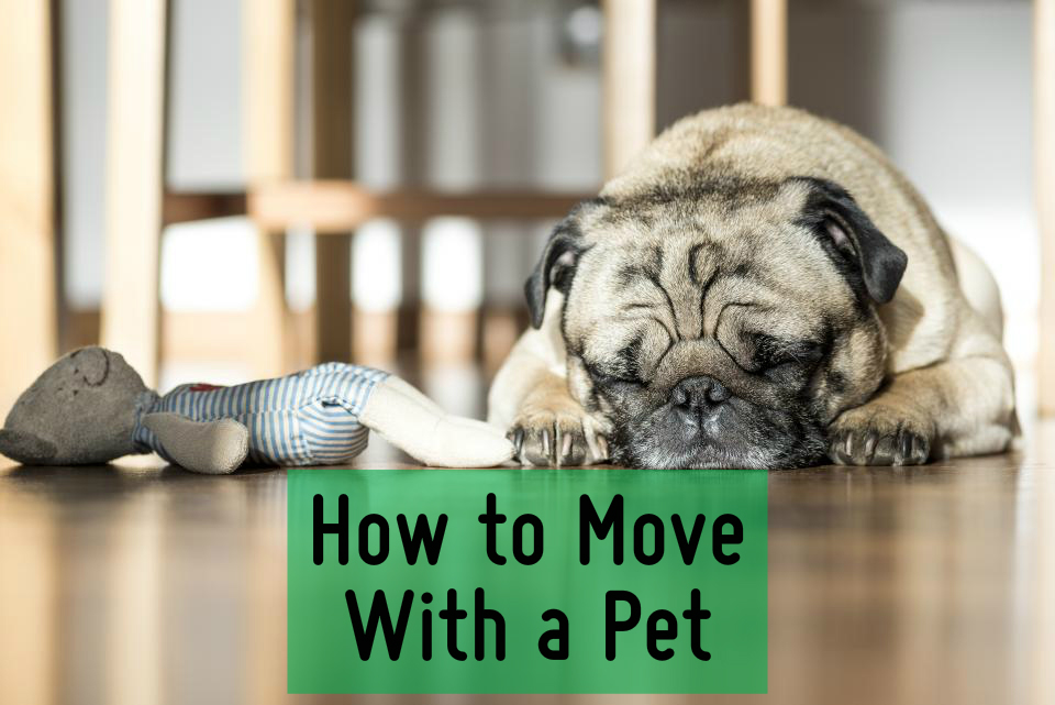 How to Move With a Pet