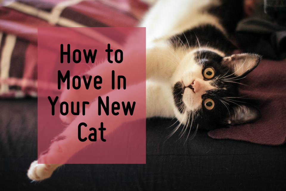 How to move in a new cat or kitten