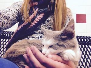 Jenni's adopted kitten, Cupcake