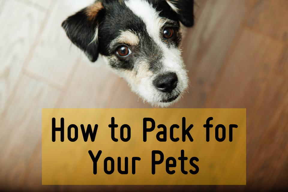 How to Pack for your Pets when moving