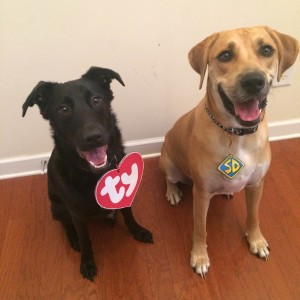 Beanie Baby and Scooby Doo Halloween costumes