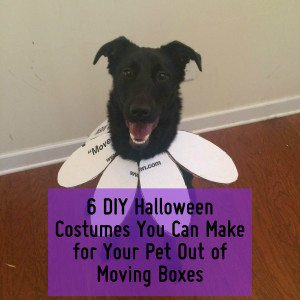 5 DIY Halloween Costumes You Can Make for your Pet out of Moving Boxes