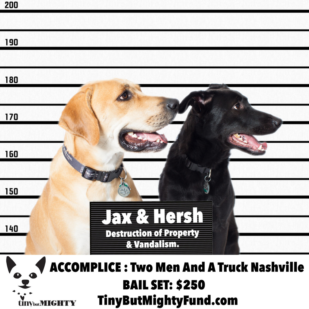 "Jax and Hersh are our ""pupbassadors"" for the Tiny But Mighty Fund!"