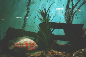 Aquariums need special care to be moved.