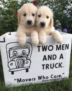 Puppies in a TWO MEN AND A TRUCK moving box