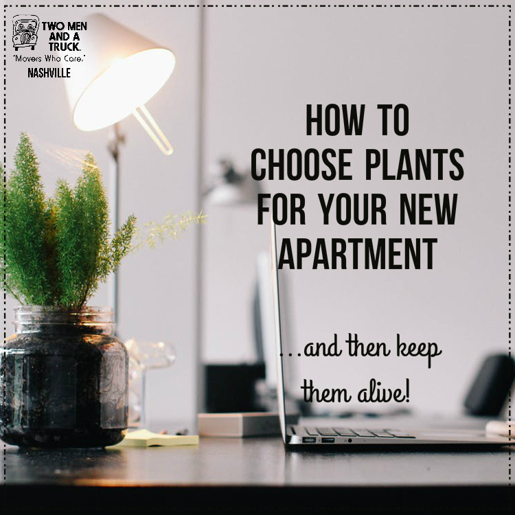 TWO MEN AND A TRUCK's tips for house plants