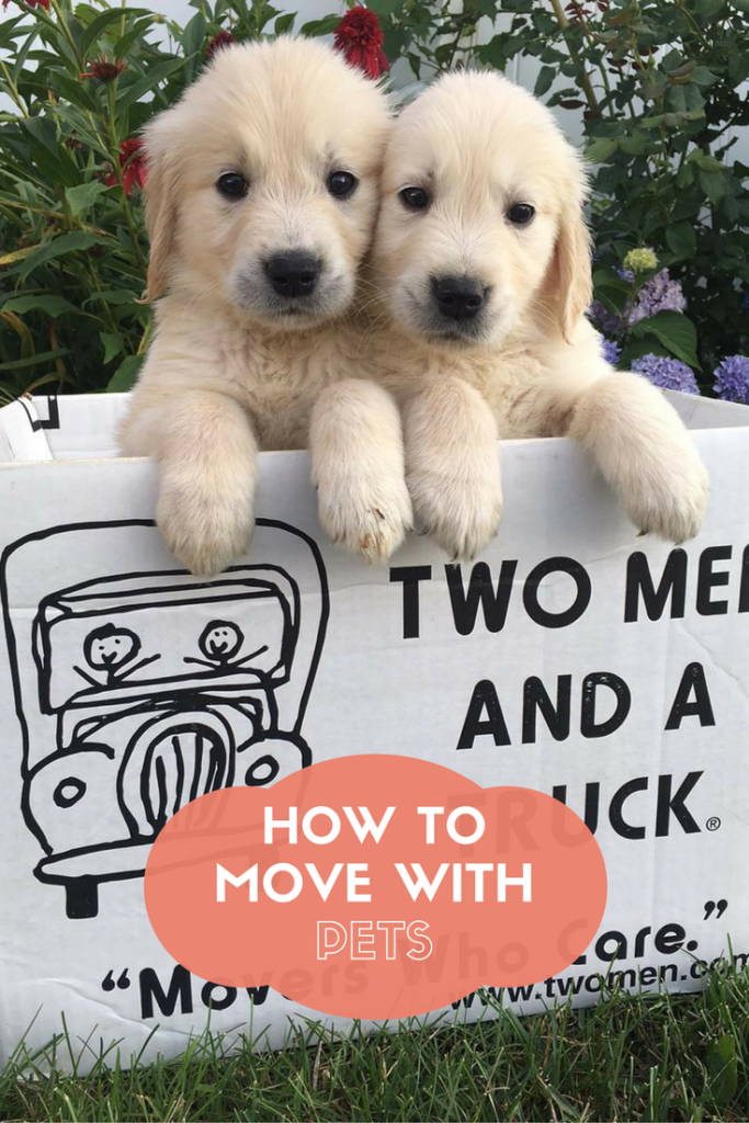 TWO MEN AND A TRUCK how to move with pets